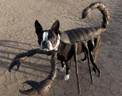 perro-disfraces-internet2